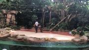 新加坡河川生态园+日间动物园(含小火车) 成人票