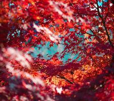 不止是黄昏落叶,香港的秋天正绽放着美丽