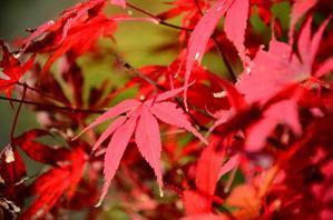 光雾山的红叶情怀