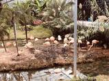 无锡动物园成人票+欢乐大马戏套票