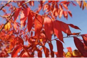沂蒙山红叶之旅