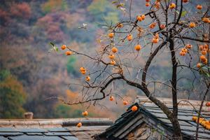 """游北京最""""红火""""的坡峰岭,住网红民宿"""