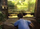 上海大自然野生昆虫馆