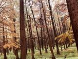 金湖水上森林