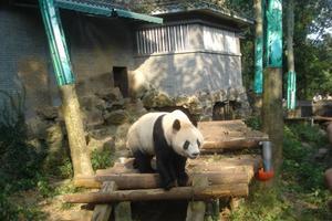 杭州动物园游