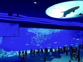 【上海海昌抢鲜体验】超级详细的上海海昌海洋公园亲子游攻略