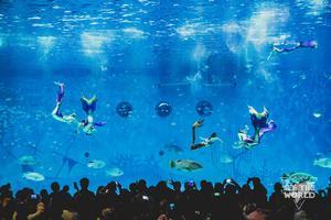 KiKiWiWi带你揭秘上海海昌海洋公园亲子游
