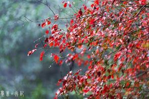 【旅行中的摄影师】走进森林,走进时光,走进浙江的诗画山水