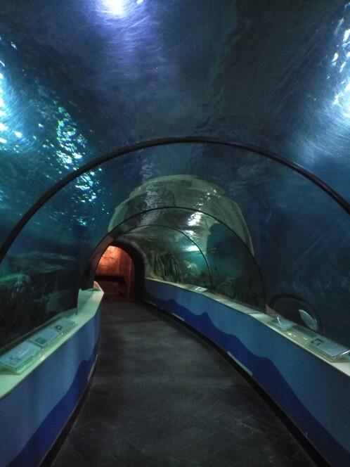 苏州海洋馆