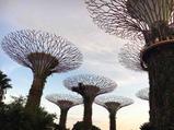 新加坡滨海湾花园家庭票扫码入园(2大1小)