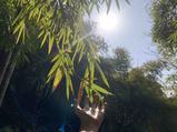 川西竹海峡谷景区(金鸡谷)