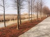 上海东滩湿地公园 - 节假日单门票双人套票