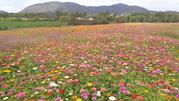 亚龙湾玫瑰谷