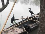 长兴图影生态湿地文化园