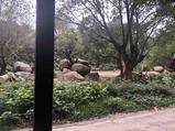 广州长隆3天2晚【三人自由行特卖】住长隆香江酒店(长隆野生动物世界店)+长隆野生动物园(两天多次入园)+长隆国际马戏大剧院