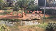 无锡动物园·太湖欢乐园