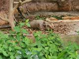 新加坡河川生态园+日间动物园(含小火车) 儿童票