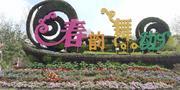 上海周浦花海