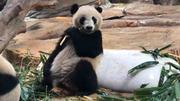 【光大银行专享】长隆野生动物世界节假日家庭票(2大1小)请选择相同游玩日期下单