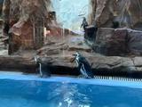 【超级巡礼】珠海长隆2天1晚【双人自由行】住企鹅酒店+玩海洋王国(两天多次入园)+双人自助午餐