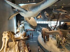 【我是旅行家】沪上寓教于乐溜娃圣地—上海自然博物馆