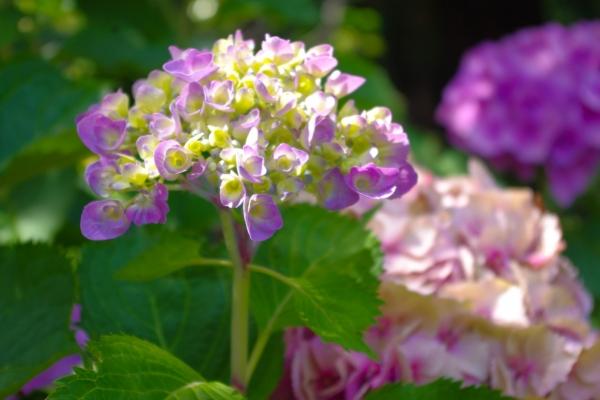 【与佳同行,自在游天下】从温哥华到维多利亚,享受赏花的春天气息