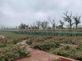 紫海薰衣草景区
