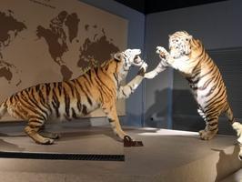 """【一写就""""惠""""】上海自然博物馆"""
