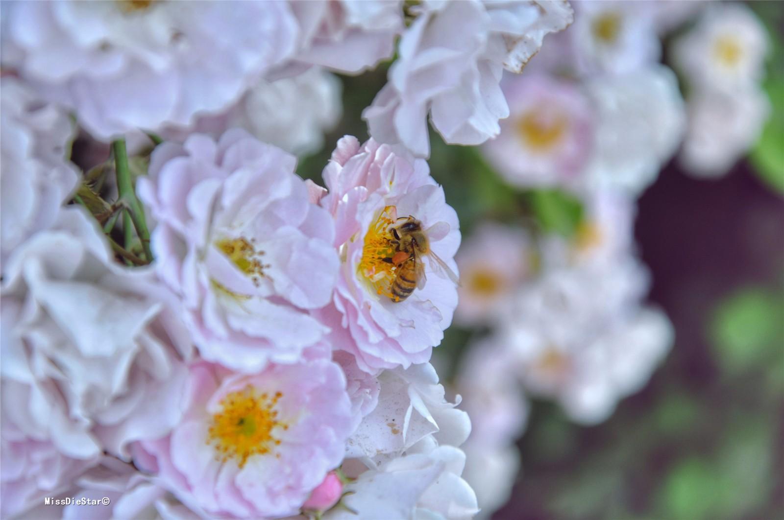 【11周年,我的旅行故事】新晋世界地质公园有个停车场,蔷薇盛开令人着迷