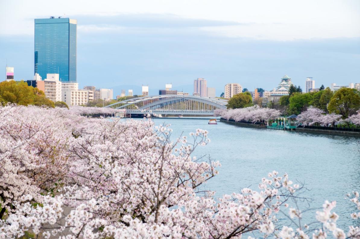 樱之宫天满桥 绚烂的河岸樱花 【毛马樱之宫公园】