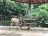 常州淹城野生动物园
