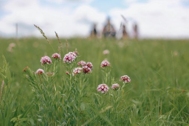 夏日狂欢呼伦贝尔大草原游记,附最美攻略