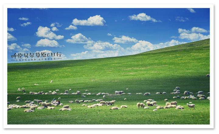 最真草原情 醉人六月天——呼伦贝尔大草原旅游包车攻略