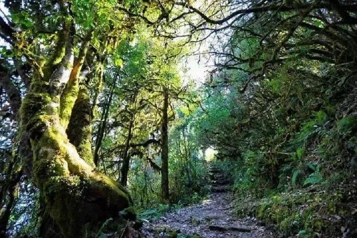 虫鸣花丛配凉风,这里是森林系腾冲的夏日打开方式