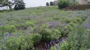 巴布洛生态谷