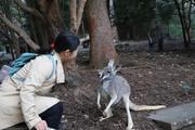 澳大利亚悉尼塔龙加动物园