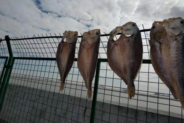 【上海微旅游】探访上海最后的渔村——金山嘴渔村