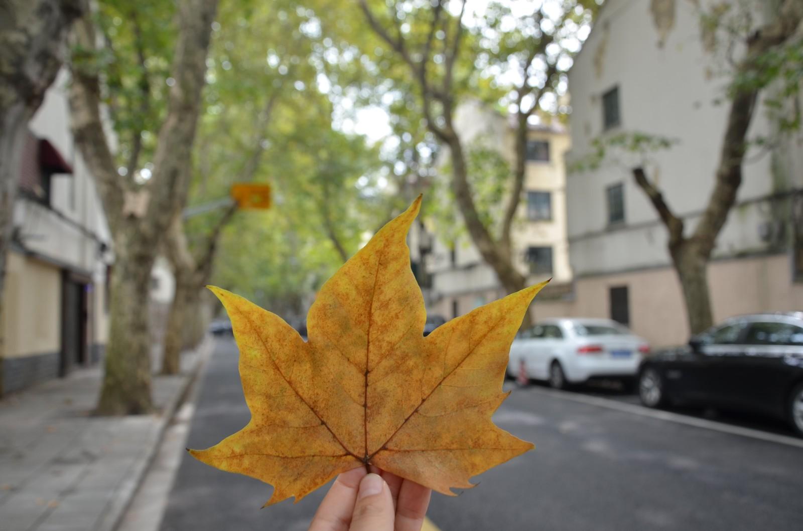 【上海微旅游】從衡山路到武康路,永不褪色的上海夢