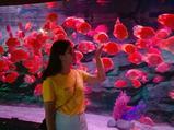 昆明花都海洋世界