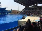 上海海昌海洋公园