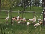 南通森林野生动物园