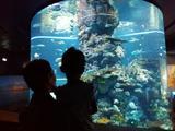 S.E.A 海洋馆+MEM海事博物馆亲子票 2大1小
