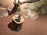 南京金鹰动物世界