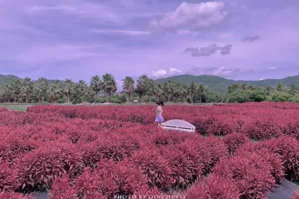 【我和祖国合影】在紫色花园奔跑 在小圣托里尼看海 在椰梦长廊起舞