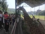 乐和乐都主题公园(重庆野生动物世界)