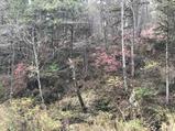 五营国家森林公园