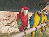 西霞口神雕山野生动物园