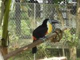 雅戈尔动物园