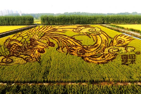 赏稻田画,住被动房,曹妃甸许你一场多彩之旅
