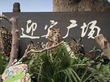 太湖龙之梦乐园
